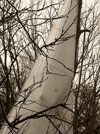 arbreavoile