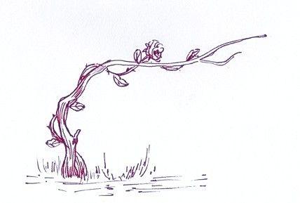 Illustration de Berce