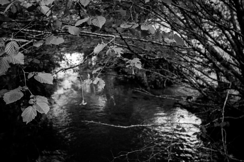(c) Photo collection personnelle,  (ruisseau de la Ligueure dans les Deux-Sèvres)